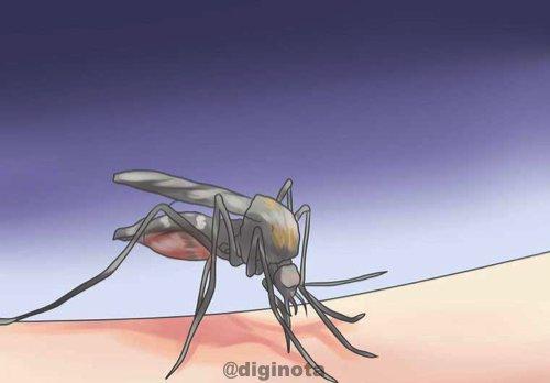 Todo sobre el Chikungunya y cómo recuperarse 15