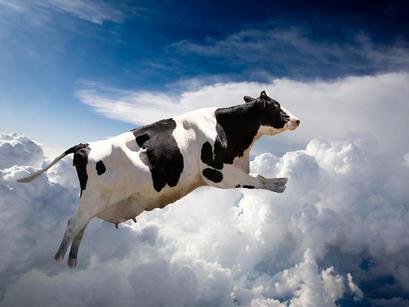 Orientación de las vacas