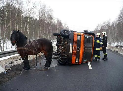 "A drunk farmer came a cropper after strapping his horse to a broken down truck and getting the horse to pull the truck to a nearby garage. But as the animal heaved the Mercedes truck along the road, pie-eyed farmer Leszek Stepien from Skwierzyna in Poland, was unable to steer straight. As they rounded a corner, a driver coming from the opposite direction careered into the truck sending it crashing on to its side. Stepien clambered out of the cab uninjured and began yelling at the horse: ""This is all your fault."" When police arrived they found him to be two-times over the drink drive limit."