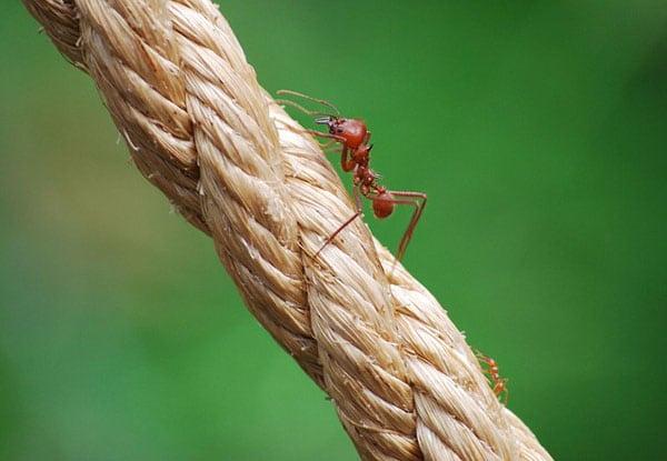 controlar las hormigas