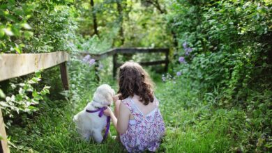 Photo of Los mejores Perros para niños, sus pros y contras y Cómo elegir la raza de perro más apropiada para ti