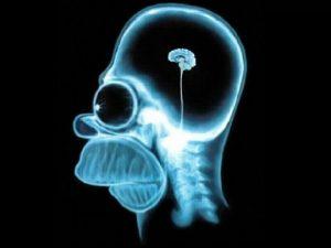 Cantidad de amigos en Facebook está asociada a la densidad cerebral 1