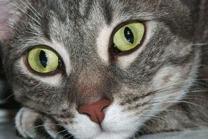 gato_memoria