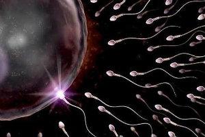 espermas-ovulo