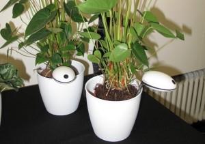 Ahora el Wi-Fi nos recuerda regar las plantas con  Wi-Fi Plant Sensor 1
