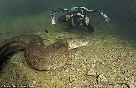 Imágenes de una anaconda tomadas por un osado buzo Impresionantes 1