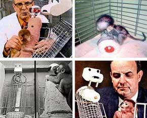 Los Experimentos Psicológicos más controvertidos de la historia 1