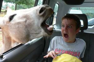 Los 10 mejores vídeos de sustos, para morir ¡De la risa! 1