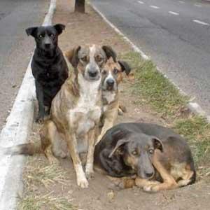 Perros callejeros salvaron a una niña de ser violada 1