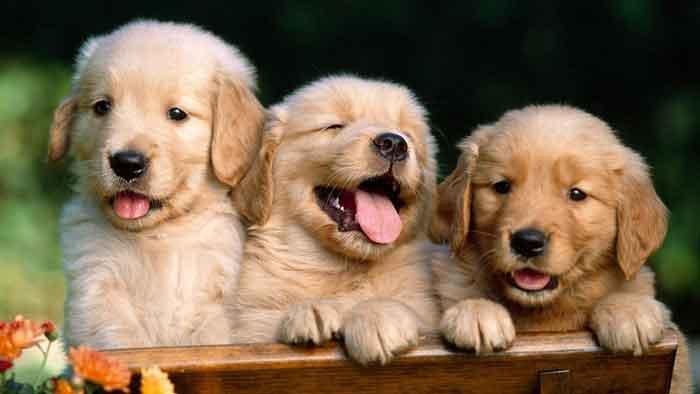 ¿Cómo nos condiciona la presencia de un perro? según estudio de investigación 3