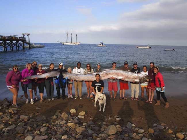 Un Gigante pez aparece en aguas de California