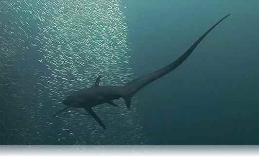 tiburon-coletazos-1