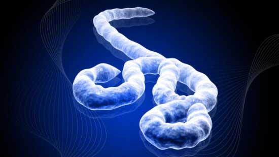 virus-ebola-1