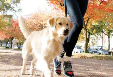 perros para deportes
