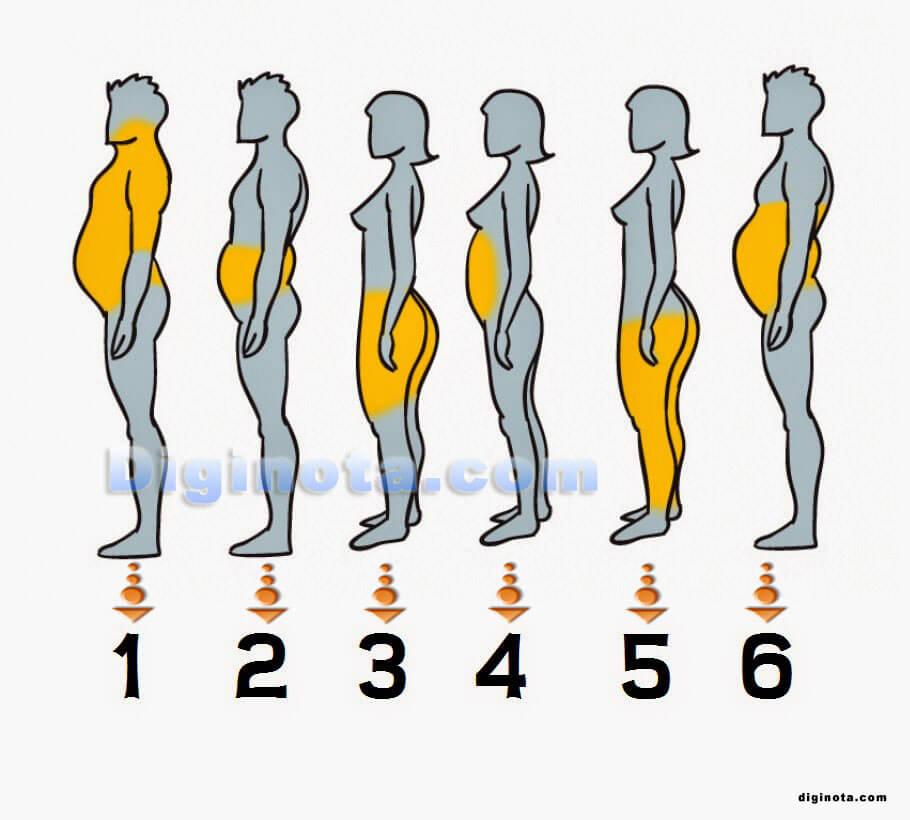grasa y dietas