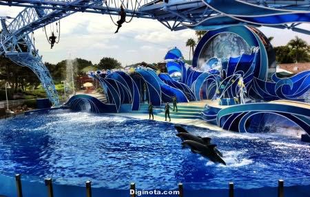 seaworld_dolphins