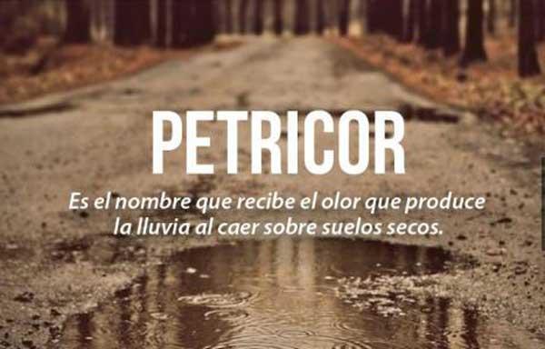 Petricor : El olor de la Lluvia