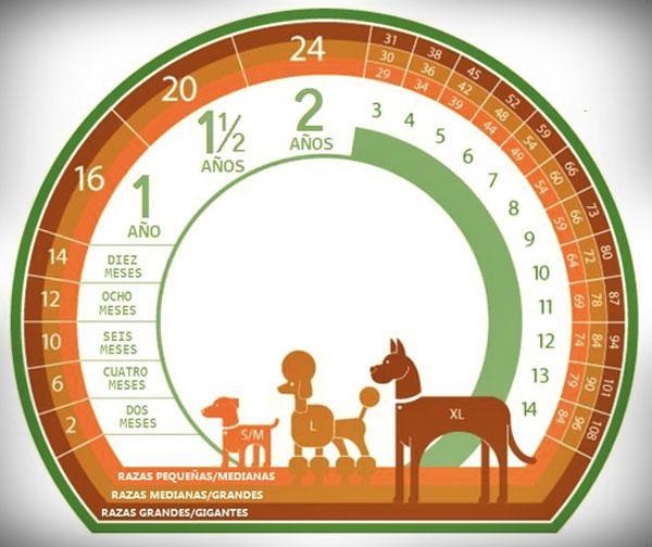 Tabla para Calcular La EDAD de Tu Mascota