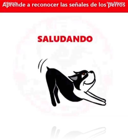 postura de los perros