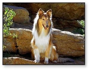Los mejores Perros para niños, sus pros y contras y Cómo elegir la raza de perro más apropiada para ti 10