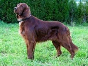 Los mejores Perros para niños, sus pros y contras y Cómo elegir la raza de perro más apropiada para ti 11