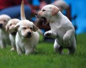 Los mejores Perros para niños, sus pros y contras y Cómo elegir la raza de perro más apropiada para ti 2
